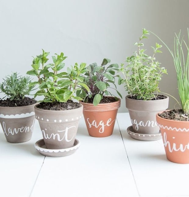 diy-label-herb-planters-via-jessica-coco-and-mingo-for-bodhiluxe